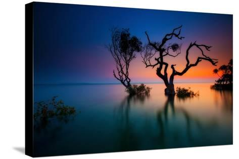 Trees in Bay at Sunset-visionandimagination.com-Stretched Canvas Print