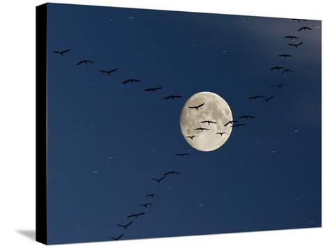 Cranes Flying to Moon-Sebastian Schneider-Stretched Canvas Print