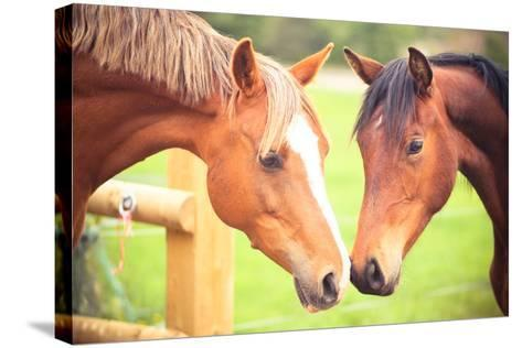 Two Horse-Sasha Bell-Stretched Canvas Print