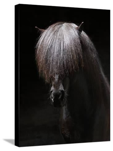 Portrait of Stallion-Arctic-Images-Stretched Canvas Print