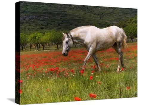 Poppies and Horse-Joanot-Stretched Canvas Print