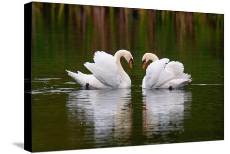 Love Birds-Colin Carter Photography-Stretched Canvas Print