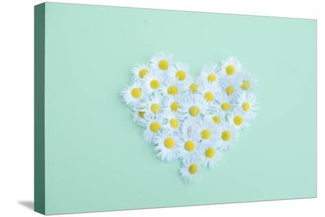 Little Daisy-Poppy Thomas-Hill-Stretched Canvas Print