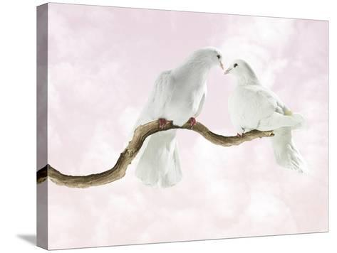 Two Doves Looking at Each Other against Pink Sky-Michael Blann-Stretched Canvas Print