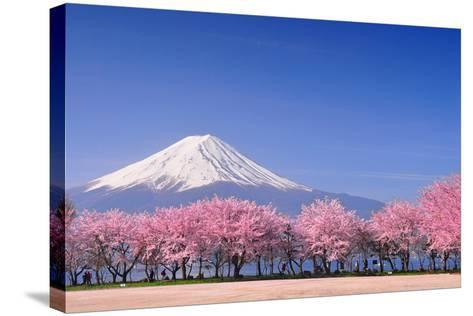 Fuji and Sakura-Peerapat Tandavanitj-Stretched Canvas Print