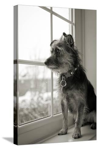 Looking Out-Steve K Photography-Stretched Canvas Print