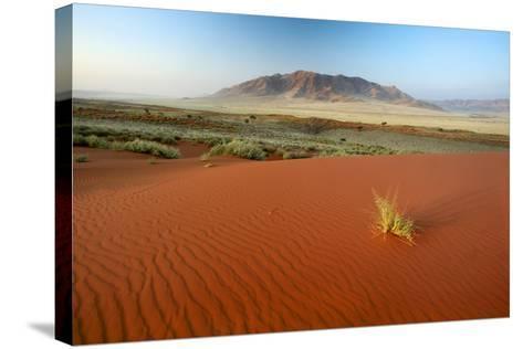 Namib Desert, Namibia-Ben Cranke-Stretched Canvas Print