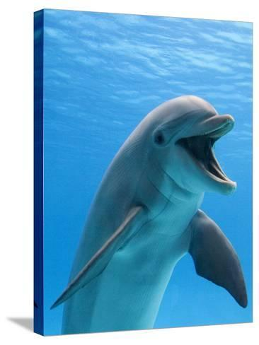 Bottlenose Dolphin Underwater-Augusto Leandro Stanzani-Stretched Canvas Print