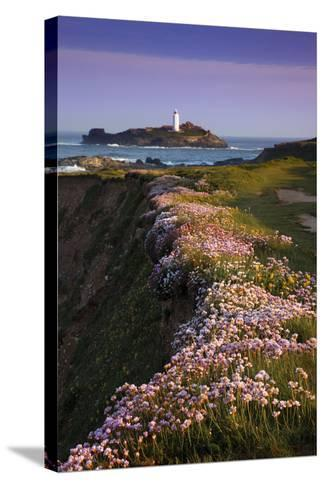 Godrevy Thrift in Flower--Stretched Canvas Print