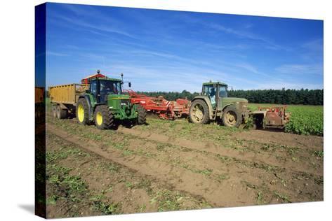Farming Harvesting Potatoes--Stretched Canvas Print