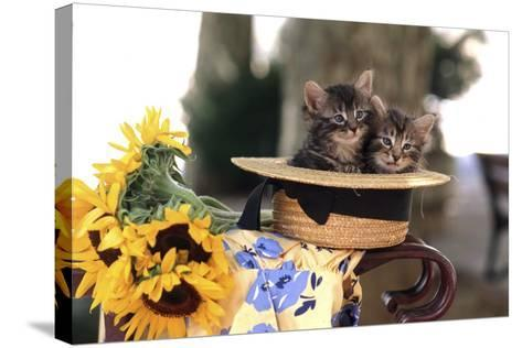 Kittens in Hat with Flowers--Stretched Canvas Print