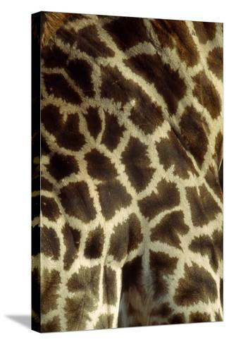Southern Giraffe Markings--Stretched Canvas Print
