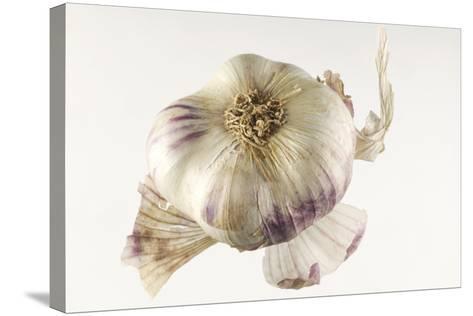 Garlic--Stretched Canvas Print