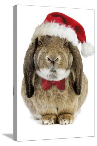 Rabbit Belier Francais Breed Wearing Christmas--Stretched Canvas Print