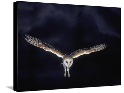 Barn Owl in Flight, at Night--Stretched Canvas Print