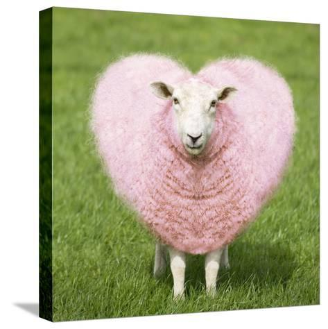 Sheep Ewe Pink Heart Shaped Wool--Stretched Canvas Print