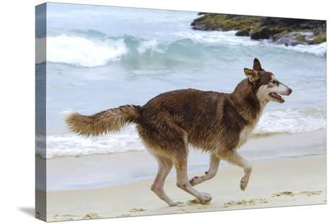 Playing on the Beach--Stretched Canvas Print