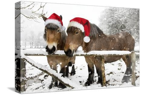 Belgian Horses in Winter Wearing Christmas Hats--Stretched Canvas Print