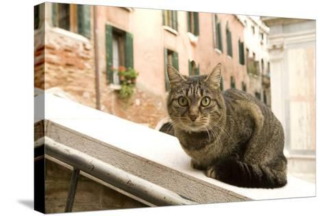 Cat on Ledge--Stretched Canvas Print