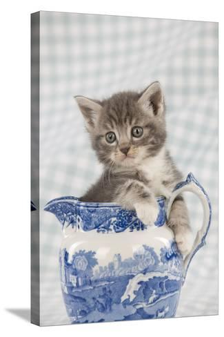 Grey Tabby Kitten Sitting in China Jug--Stretched Canvas Print