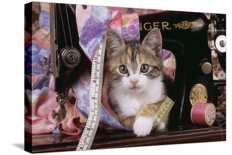 Kitten with Sewing Machine--Stretched Canvas Print