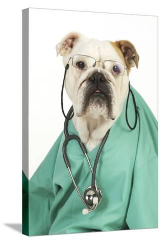Bullin Vets Scrubs Wearing Glasses and Stethoscope--Stretched Canvas Print