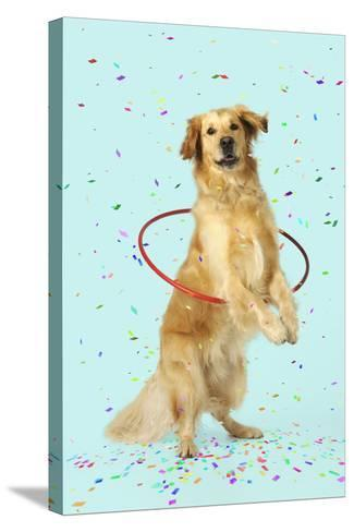 Golden Retriever Doing Hoola Hoop with Falling Confetti--Stretched Canvas Print