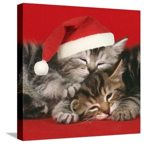 2 Kittens One Sleeping Wearing Christmas Hats--Stretched Canvas Print