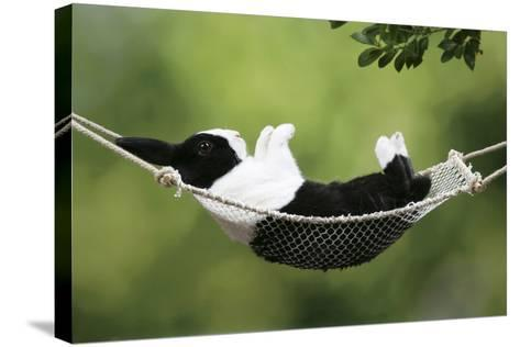 Rabbit in a Hammock at Easter--Stretched Canvas Print