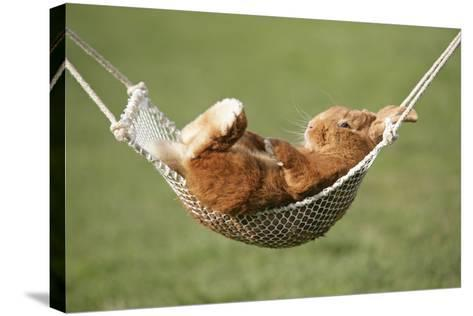 Rabbit Lying Down in a Hammock--Stretched Canvas Print