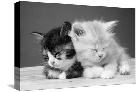 Two Kittens Asleep--Stretched Canvas Print