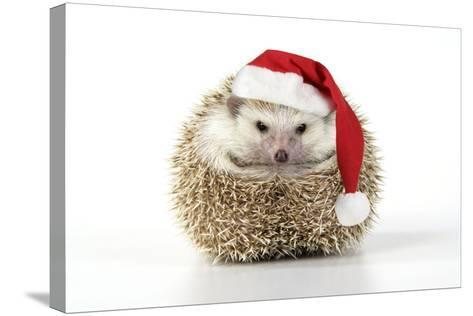 Hedgehog Wearing Christmas Hat--Stretched Canvas Print