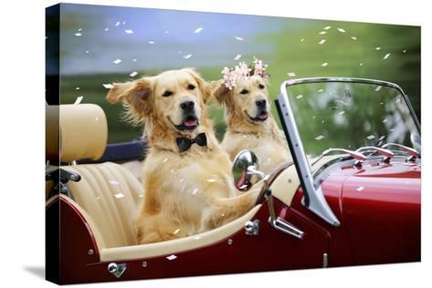 Golden Retriever Dog Wedding Couple in Car with Confetti--Stretched Canvas Print