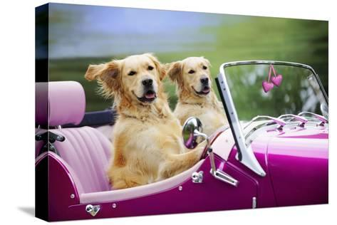 Golden Retriever Dog, Two Valentine Dog Couple in Car--Stretched Canvas Print