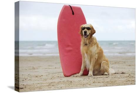 Golden Retriever Wearing Sunglasses Next to Surf Board--Stretched Canvas Print