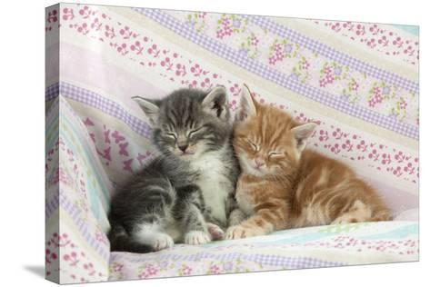 Ginger and Grey Tabby Kittens Sleeping--Stretched Canvas Print
