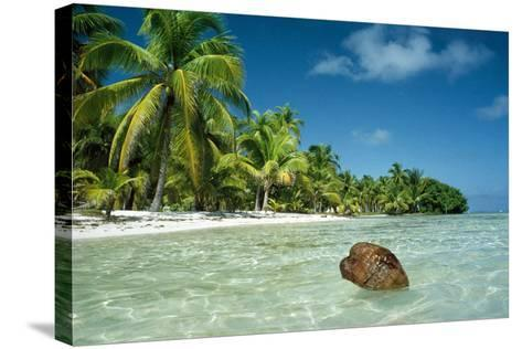Coconut Floating Ashore on to Tropical Island--Stretched Canvas Print