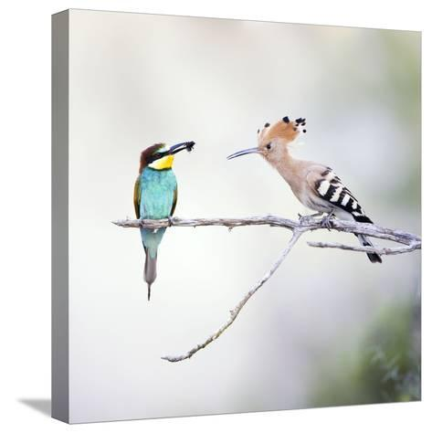 European Bee Eater Perched with a Honey Bee--Stretched Canvas Print