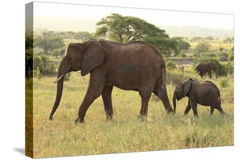 African Savanna Elephant Cow with Calf--Stretched Canvas Print