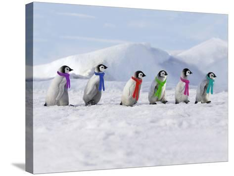 Emperor Penguins, 4 Young Ones Walking in a Line--Stretched Canvas Print