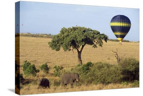 Safari, Hot-Air Balloon--Stretched Canvas Print