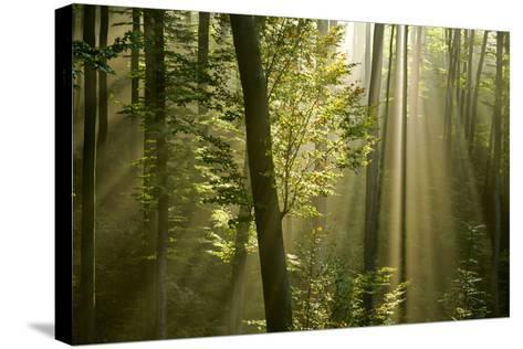 Mist in Forest Sunrays Breaking Through Autumn Forest--Stretched Canvas Print