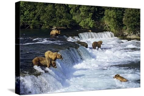 Coastal Grizzlies or Alaskan Brown Bears Fishing--Stretched Canvas Print