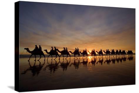 Camel Safari Famous Camel Safari on Broom's Cable--Stretched Canvas Print
