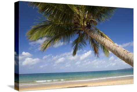 Coconut Palm--Stretched Canvas Print