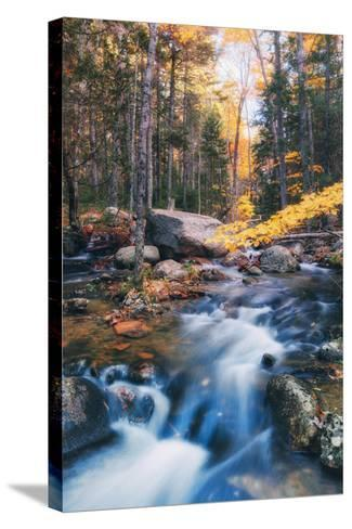 Jordan Stream in Autumn - Bar Harbor, Maine-Vincent James-Stretched Canvas Print
