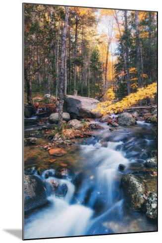 Jordan Stream in Autumn - Bar Harbor, Maine-Vincent James-Mounted Photographic Print