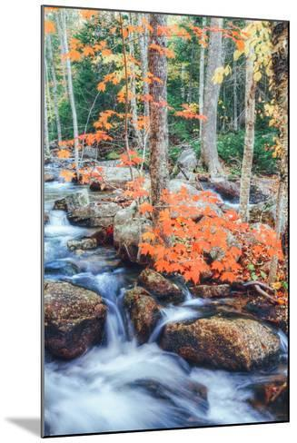 Autumn Stream Detail - Bar Harbor ,Maine-Vincent James-Mounted Photographic Print