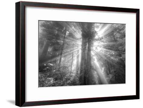 God Beams and The Redwoods (Black and White)-Vincent James-Framed Art Print