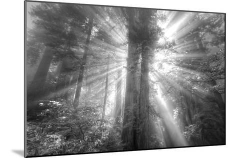 God Beams and The Redwoods (Black and White)-Vincent James-Mounted Photographic Print